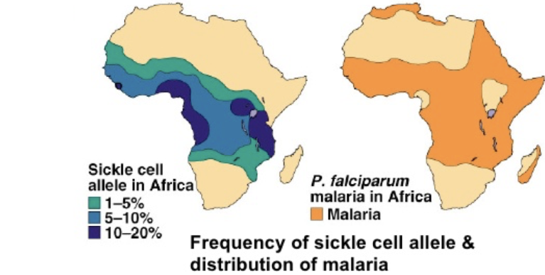 frequency of sickle cell