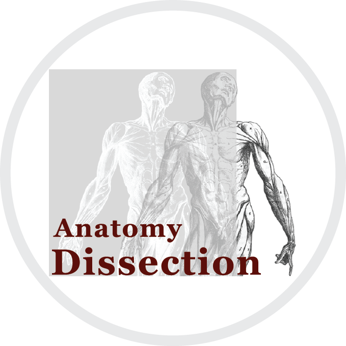 Image Anatomy dissection