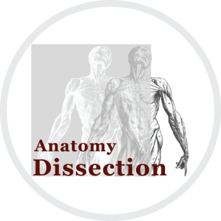 Anatomy dissection