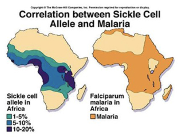 correlation sickle cell